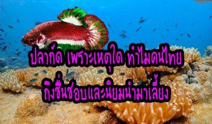 ปลากัด เพราะเหตุใด ทำไมคนไทยถึงชื่นชอบและนิยมนำมาเลี้ยง
