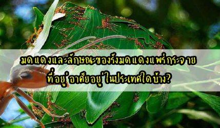 มดแดง และลักษณะของรังมดแดงแพร่กระจายที่อยู่อาศัยอยู่ในประเทศใดบ้าง?