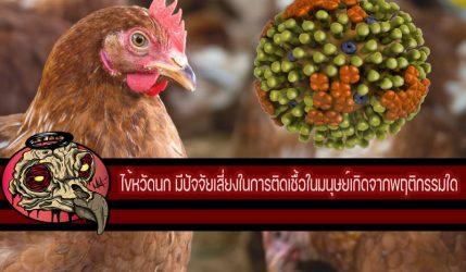 ไข้หวัดนก มีปัจจัยเสี่ยงในการติดเชื้อในมนุษย์เกิดจากพฤติกรรมใด